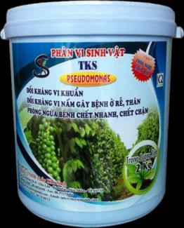 Dùng TKS-PSEUDOMONAS phòng bệnh thối nhũn cho cây trong mùa mưa