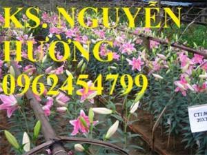 Chuyên cung cấp củ hoa ly ly và hoa ly ly các màu số lượng lớn chất lượng cao