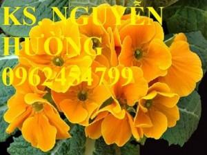 Chuyên cung cấp hạt giống hoa cây cảnh các loại chuẩn giống chất lượng cao