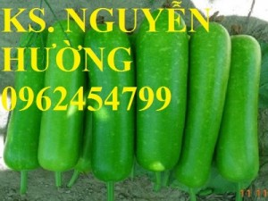 Chuyên cung cấp hạt giống rau củ quả các loại chuẩn giống chất lượng cao