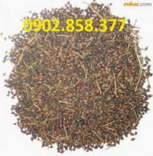 Địa chỉ bán trà nụ vối uy tín, chất lượng