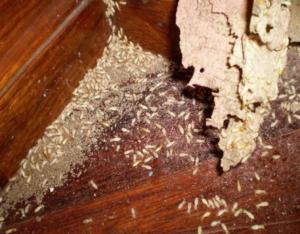 Dịch vụ diệt mối, diệt muỗi tai nhà