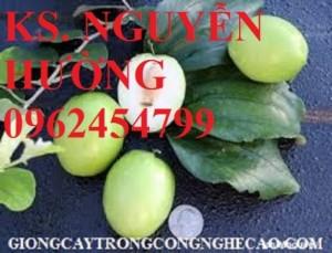 Chuyên cung cấp cây giống táo d28 chất lượng cao
