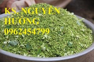 Chuyên cung cấp giống cây hoa hòe chất lượng cao