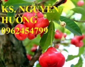 Chuyên cung cấp giống roi đỏ thái lan uy tín, chất lượng