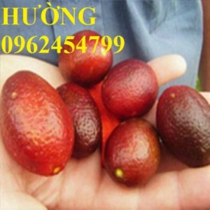 Giống cây trồng, các giống cây ăn quả mới nhập khẩu chuẩn 100% uy tín chất lượng