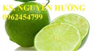 Chuyên bán giống cây chanh tứ quý (chanh tứ thì,chanh bốn mùa) chất lượng cao
