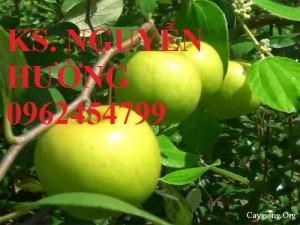 Chuyên cung cấp giống táo thái lan uy tín, chất lượng