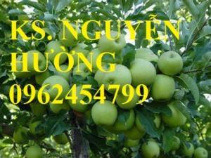 Chuyên cung cấp giống táo đại chất lượng cao