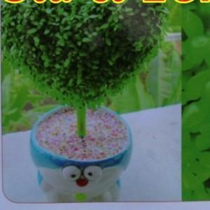Hạt giống cỏ may mắn