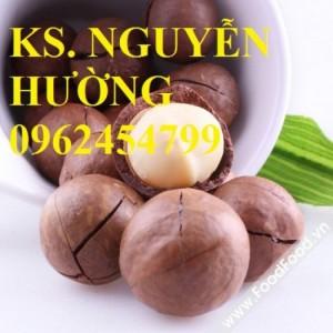 Chuyên cung cấp giống cây mắc ca (macca) uy tín, chất lượng