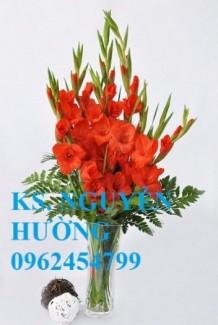 Chuyên cung cấp củ giống, cây giống hoa lay ơn (hoa dơn) uy tín, chất lượng