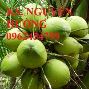 Chuyên cung cấp giống cây dừa xiêm lùn chất lượng cao