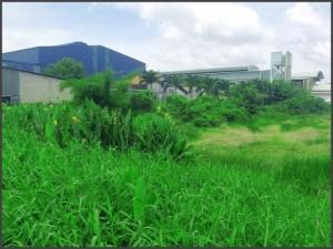 1.700m Đất Xây Kho Xưởng, Biệt Thự Vườn...