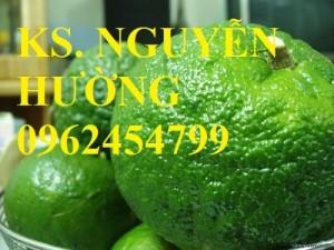 Chuyên cung cấp giống cây cam sành uy tín, chất lượng