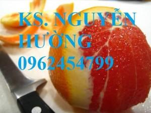 Chuyên cung cấp giống cam cara ruột đỏ uy tín, chất lượng cao
