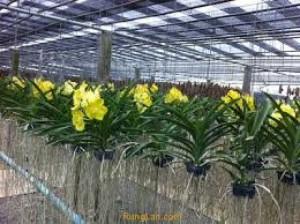 Lưới che nắng Thái Lan, lưới che nắng sân vườn,kho bãi, nhà xưởng