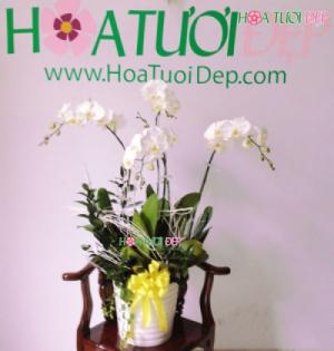 Hoa Lan Hồ Điệp trắng 4 cành - HL014