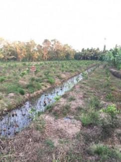 Bán đất 2 mặt tiền lộ lớn, sông lớn,ở xả bình thành- huyện phụng hiệp-tỉnh hậu giang