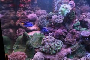 Cá biển và Hải quỳ có tại Ocean