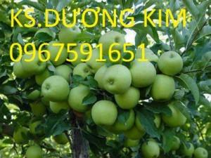 Chuyên cung cấp giống cây táo đại uy tín chất lượng cao