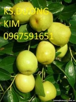 Chuyên cung cấp giống cây táo đào vàng  uy tín chất lượng cao
