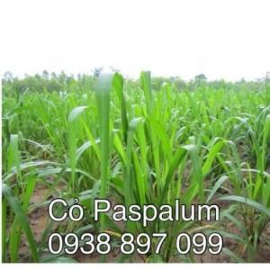 Hạt giống cỏ chăn nuôi dê ,bò ,gia cầm