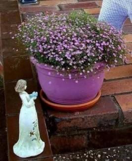 Thế giới hạt giống hoa-điều kì diệu của cuộc...