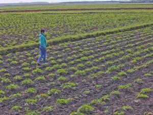 Bán đất ở Bình Hoà Nam, Đức Huệ, Long An (Đất làm trang trại) 45.000đ/m2