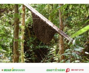 Hàng hiếm - Mật ong rừng U Minh chính gốc tại HCM