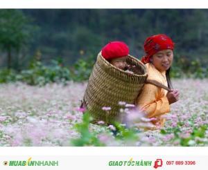 Tour Hà Giang - Mùa hoa tam giác mach 3 ngày 2 đêm