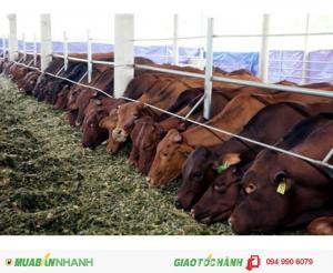 Vi sinh xử lý phân gia súc, phân chuồng -  Vi sinh nhập khẩu BCP 80