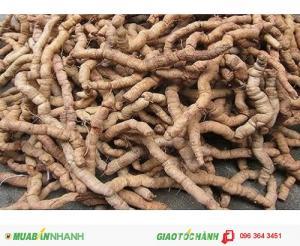 Chuyên cung cấp cây giống ba kích tím số lượng lớn, uy tín, chất lượng