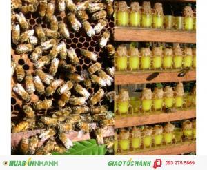 Điểm bán sữa ong chúa chất lượng & uy tín - quận 10 HCM