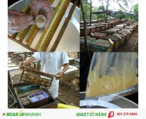 Sữa ong chúa Hoàng Gia - sản phẩm đạt chuẩn quốc tế