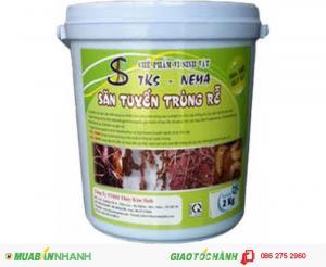 Phòng trừ bệnh chết nhanh chết chậm và tuyến trùng hại rễ bằng sản phẩm TKS-Pseudomonas + TKS-Nema + TKS-Đạm Cá