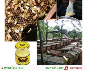 Sữa ong chúa tươi đảm bảo chất lượng