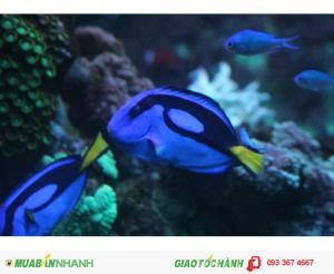 Cá biển tại Ocean - Chuyên kinh doanh,bán và cho thuê hồ cá biển