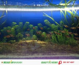 Ocean cho văn phòng/công ty/nhà ở thuê hồ cá biển, hồ cá thủy sinh cho văn phòng/công ty/nhà ở