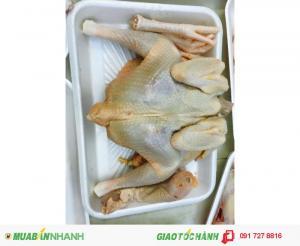 Gà mái dầu Tây Ninh - giá cả đi đôi với chất lượng