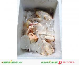 Bán gà mái dầu Tây Ninh tẩm ướp gia vị tỉ mỉ thơm ngon