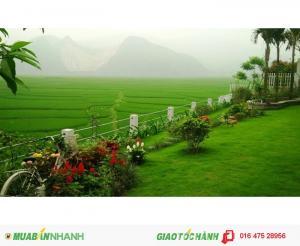 nhìn ra cánh đồng lúa