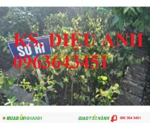 Kỹ thuật trồng và chăm sóc cây sơ ri