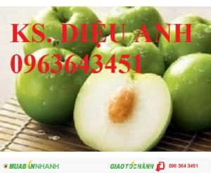 Kỹ thuật trồng và chăm sóc cây táo (táo đại,táo đào vàng,táo thái lan,táo đài loan,táo d28,táo chua)