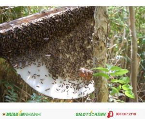 Cung cấp mật ong rừng chất lượng tại HCM