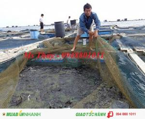 Lưới cũ nhật, lưới tái sử dụng làm lưới nuôi cá lồng bè cực tốt