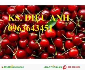 Chuyên cây giống cherry nhập khẩu chất lượng cao