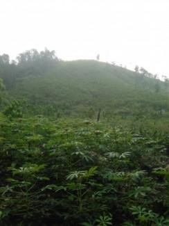 Đất trang trại