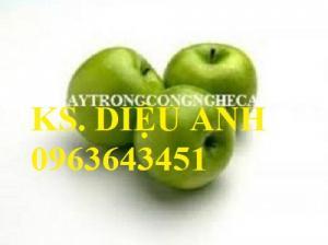 Bán giống cây táo: Táo thái lan,táo đại,táo đào vàng,táo đài loan,táo chua gia lộc, táo d28.