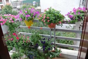 Những loại hoa làm đẹp góc ban công nhà bạn